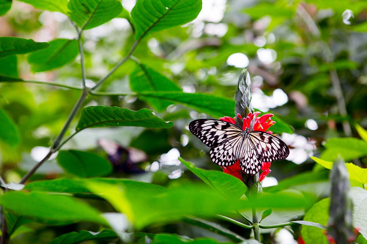 Canon 24-70mm f2.8 butterfly photo
