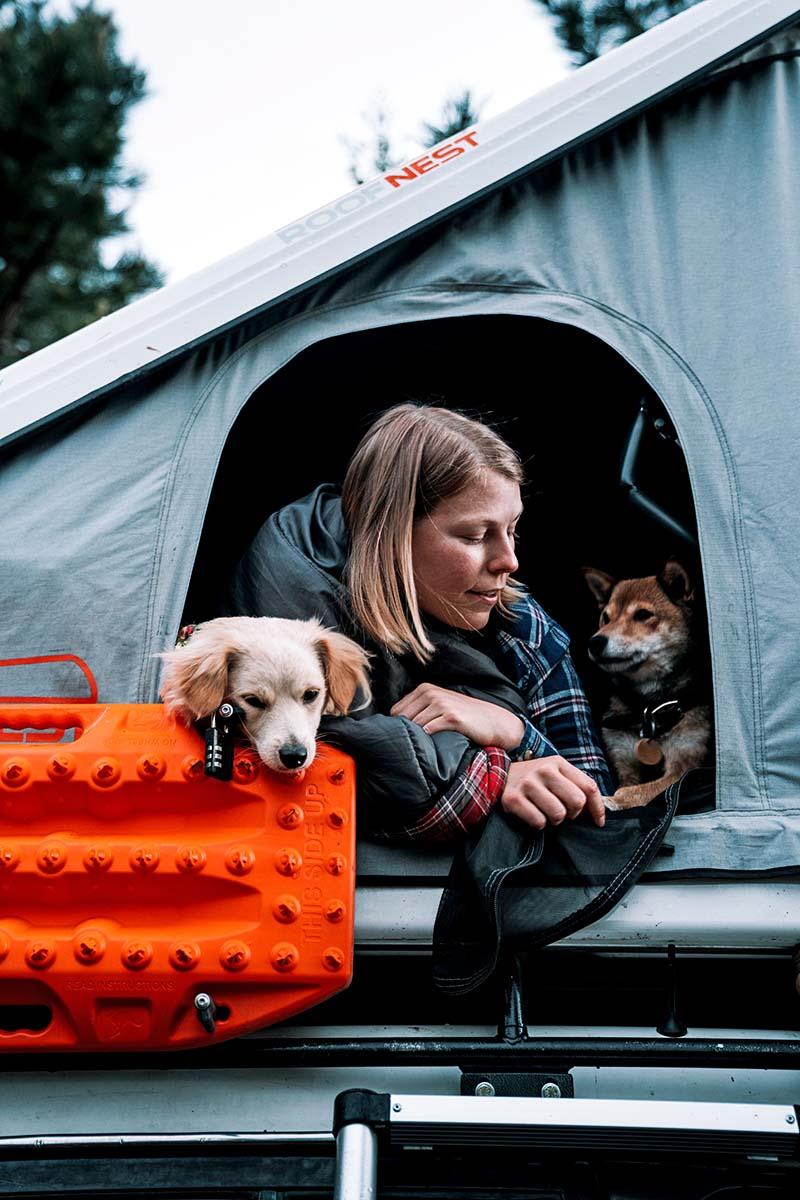 Hanging with dogs in Roofnest Sparrow Eye rooftop tent