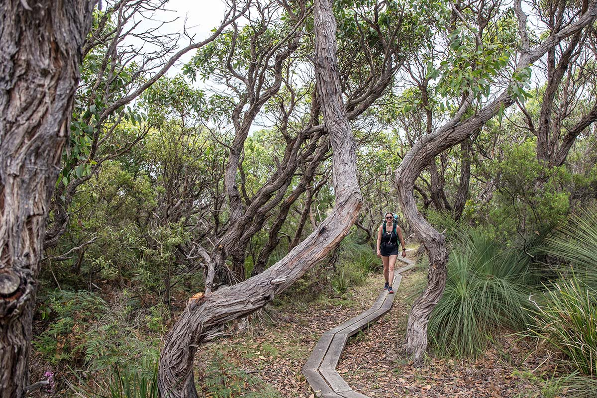 Great Ocean Walk (hiking on boardwalk in forest)