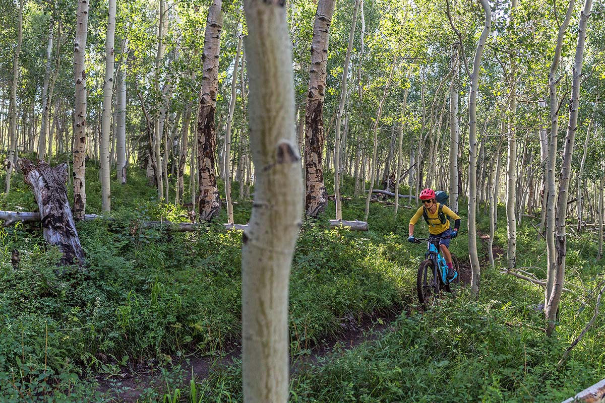 Biking through Aspen groves
