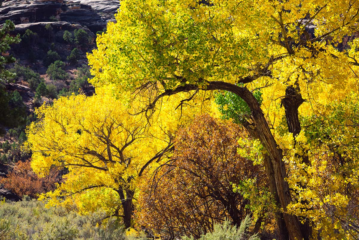 salt creek canyon (cottonwoods)