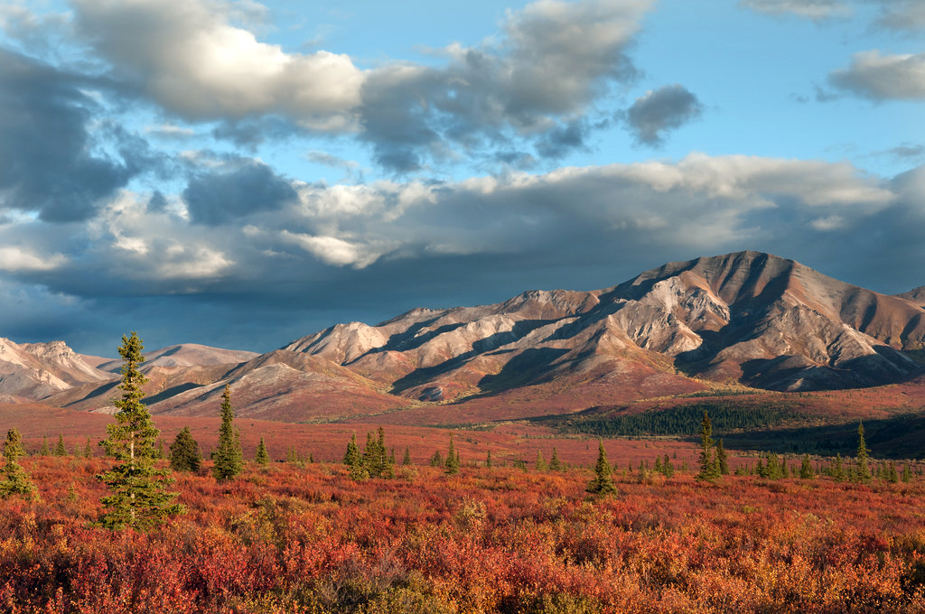 Denali National Park in fall