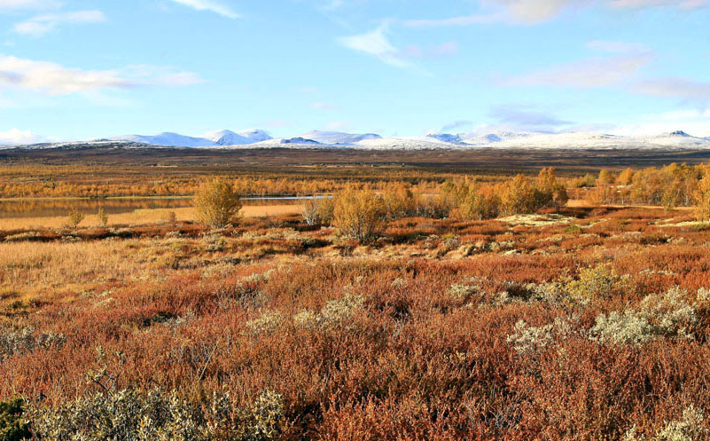 Dovrefjell fall colors