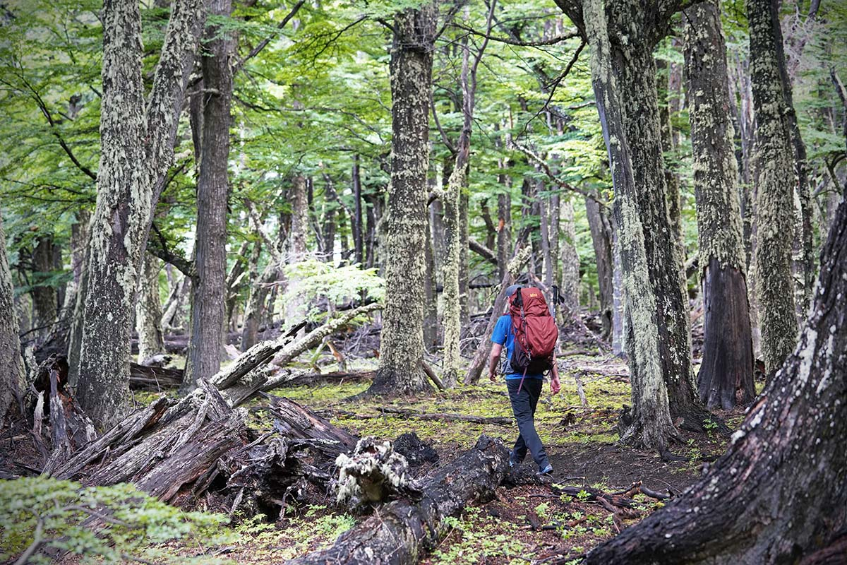 REI Traverse (forest)
