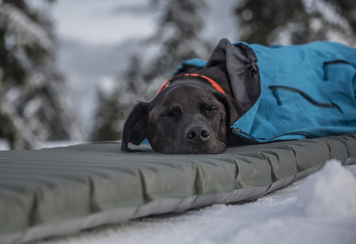 Therm-a-Rest XTherm sleeping pad (dog sleeping)