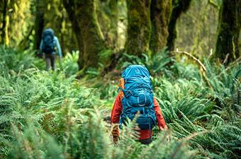 Osprey Aether 65 backpacking backpack (hiking through a field of ferns)