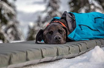 Sleeping pad (dog resting on pad in snow)