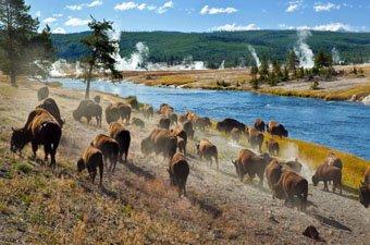 Wyoming Yellowstone