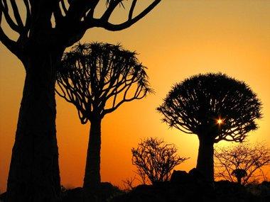 Namibia - Baobab Trees
