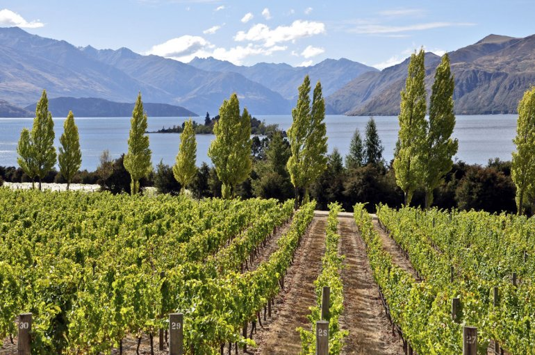 Otago Vineyard